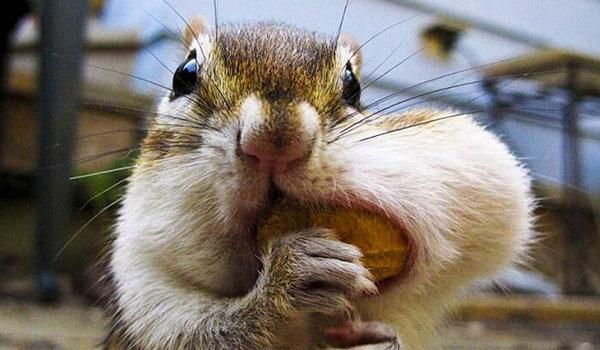 小顔になる食事 顔を小さくする方法