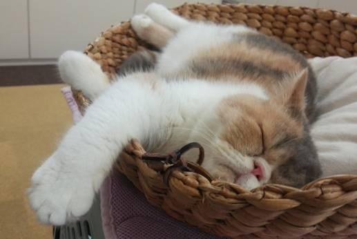 ZOOプロタレント猫