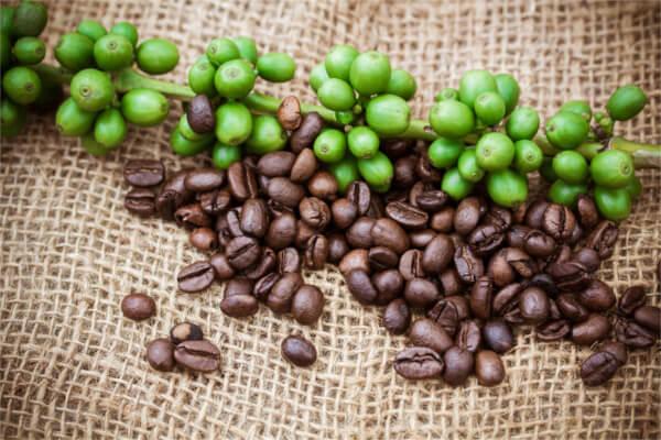 息ピュア,効果,生豆コーヒー,
